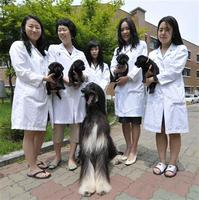 101-dalmations-dog-cloning-in-south-korea.jpg