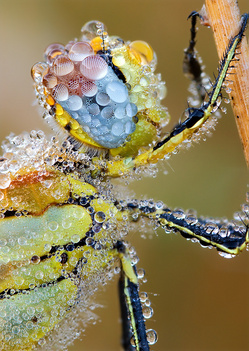 bee-dew-photo-big.jpg