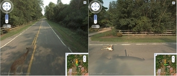 google-street-view-deer-killing-shame.jpg