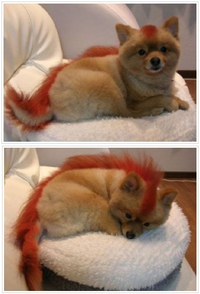 Chara Nari: Fire Fox - Hair changes to Red hair with black streaks,