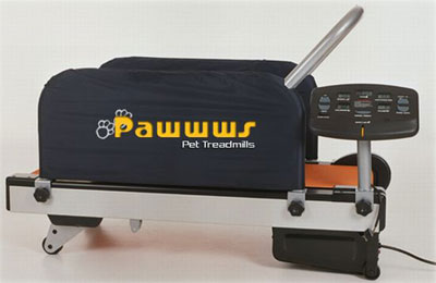 paws_treadmill.jpg
