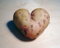scientists-sequencing-potato-dna.jpg