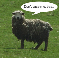 sheep-taser.jpg
